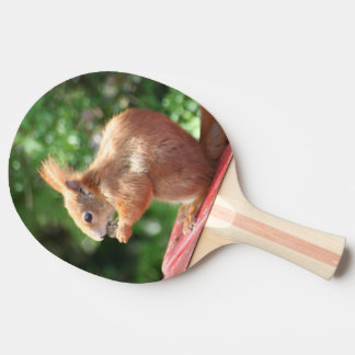 Eekhoorn Tafeltennis Bat