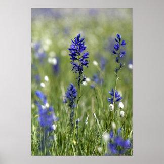 Een bergweide van wildflowers met inbegrip van poster