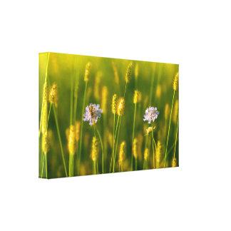 Een bij op de wildernis van de Lente bloeit Canvas Print