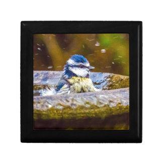 Een blauwe Mees in het Vogelbad Decoratiedoosje