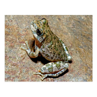 Een canion Treefrog Briefkaart