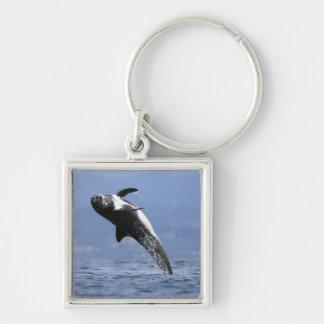 Een dolfijn Risso Zilverkleurige Vierkante Sleutelhanger