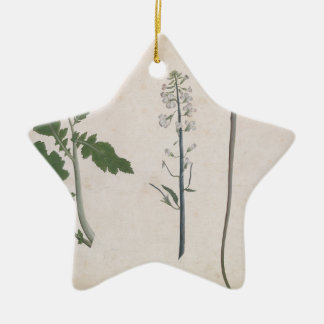 Een een een plant, Zaad, en Bloem van de Radijs Keramisch Ster Ornament