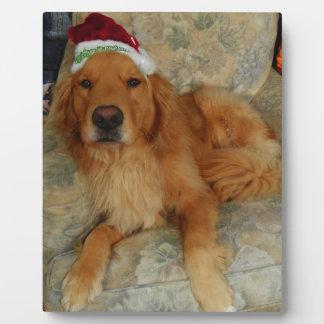 Een golden retriever bij Kerstmis met het Pet van Fotoplaat