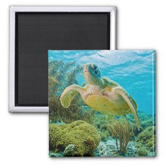Een groene Schildpad op de Ondiepe Ertsaders van Vierkante Magneet