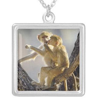 Een jonge Gele baviaan (cynocephalus Papio) Hangertjes