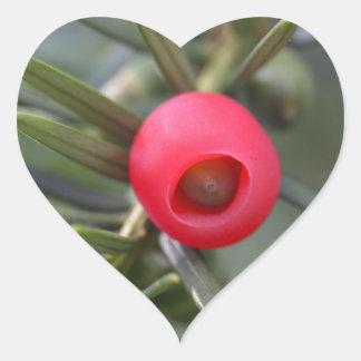 Een kegel van een taxushout (Taxus baccata) Hartvormige Sticker