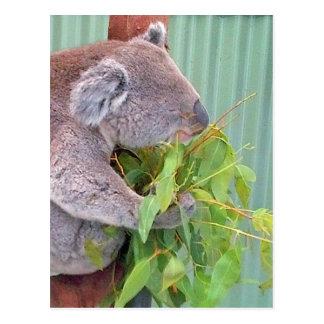 Een koala in het Briefkaart van Australië