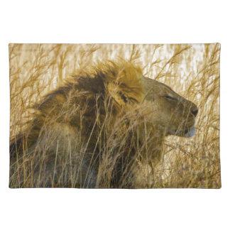Een leeuw wacht, Zimbabwe Afrika Placemat