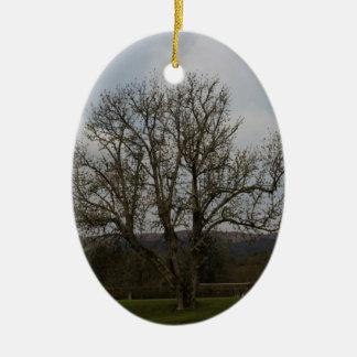 Een oude boom in het midden van speelplaats en keramisch ovaal ornament