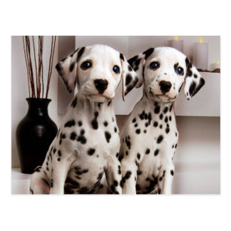 Een paar Dalmatisch Puppy Briefkaart
