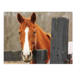 Een paard die een Deken dragen bij de Hoek Briefkaart