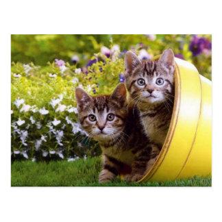 Een pot van de Bloem van Katjes Briefkaart