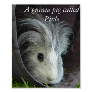 Een proefkonijn genoemd poster Pixle