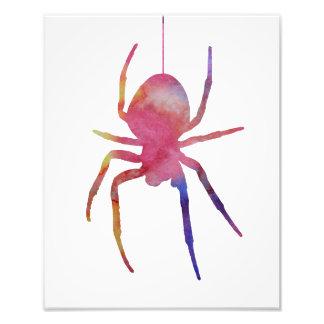 Een spin foto