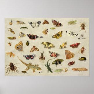 Een studie van insecten poster