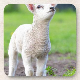 Één wit pasgeboren lam die zich in groen gras onderzetter