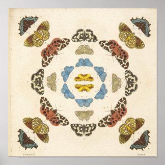 Een zeldzame Afbeelding van Vlinders en Motten Poster