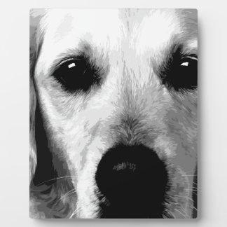 Een zwart-wit Golden retriever Fotoplaat