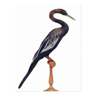 Eenden, de Vogel van de Slang, Paradijsvogel Briefkaart