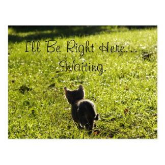 """Eenzaam Katje die """"u"""" missen Briefkaart"""