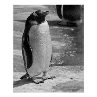 """Eenzame Pinguïn "" Poster"