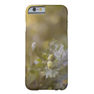 Eikels op eiken boom barely there iPhone 6 hoesje