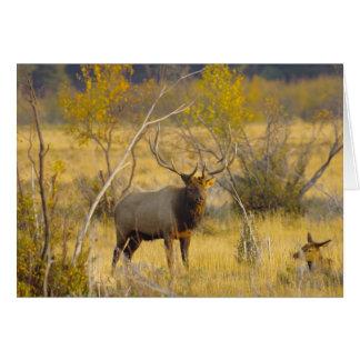 Elanden in Colorado Wenskaart
