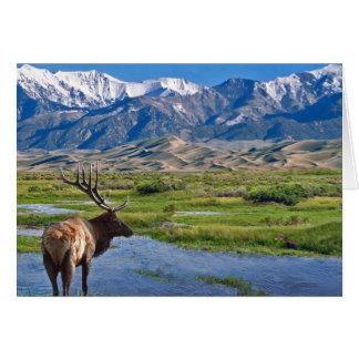 Elanden van de Bergen van Colorado de Rotsachtige Kaart