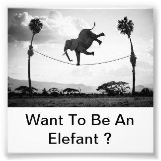 Elefant Foto Afdrukken