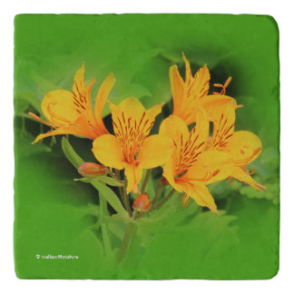 Elegante Lelie van Incas/Gele Alstroemeria Trivet