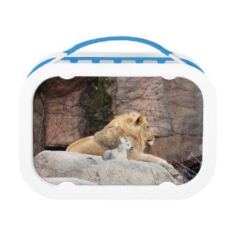 En de Leeuw ligt met het Lam Lunchbox