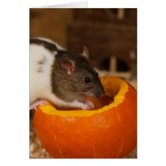 enge Zwarte rat die Met een kap pompoenzaden eten Kaart