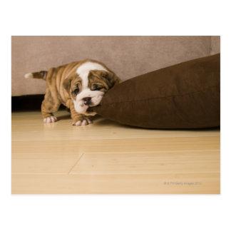 Engels het puppy van de Buldog het bijten Briefkaart