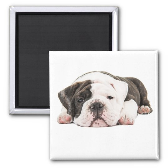 Engelse bulldog puppy magneet