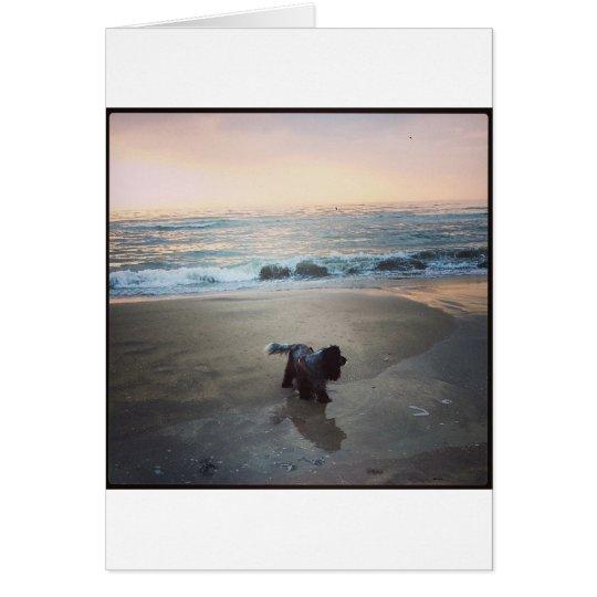 English Cocker Spaniel on the beach Kaart