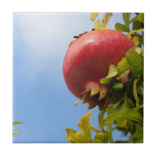 Enig rood granaatappelfruit op de boom in bladeren tegeltje