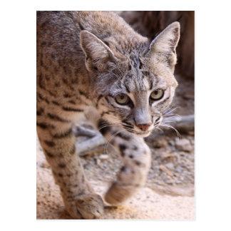 Enige Bobcat Briefkaart