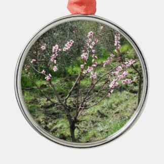 Enige perzikboom in bloesem. Toscanië, Italië Zilverkleurig Rond Ornament