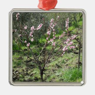 Enige perzikboom in bloesem. Toscanië, Italië Zilverkleurig Vierkant Ornament