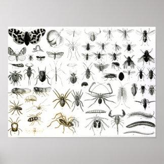 Entomologie, Duizendpoten en Arachnida Poster