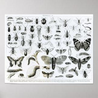 Entomologie Poster
