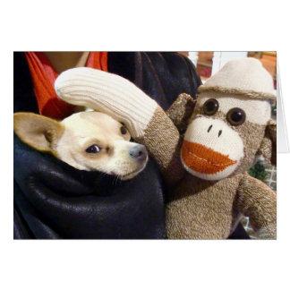 Ernie de Aap van de Sok en de Kaart Chihuahua