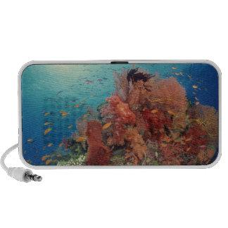 Ertsader schilderachtig van harde koralen, zachte  mp3 speaker