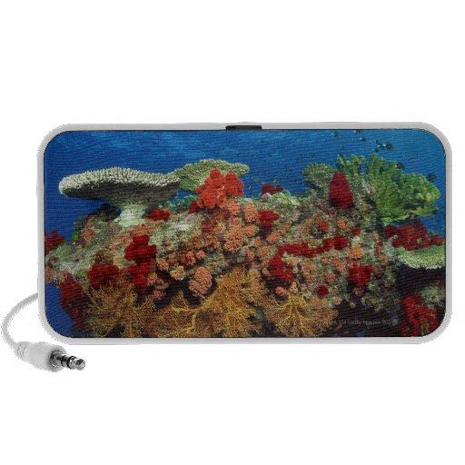 Ertsader schilderachtig van harde koralen, zachte  iPod speakers