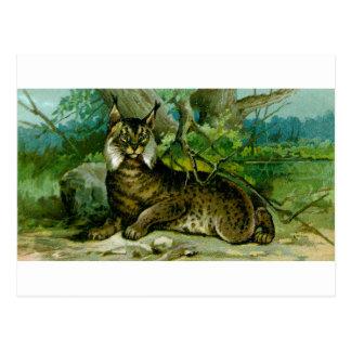Europees-Aziatische Lynx Briefkaart