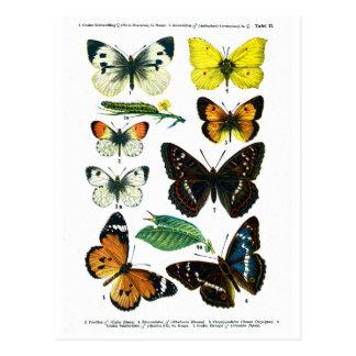 Europees Bord II van Vlinders Briefkaart