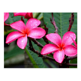 Exotische Bloemen, Frangipani in Singapore Briefkaart