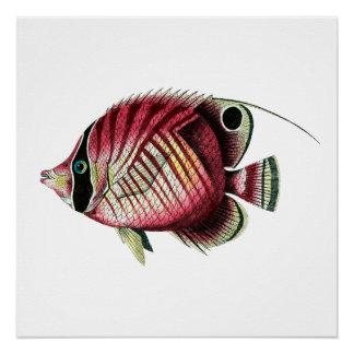 Exotische kleurrijke vissen poster