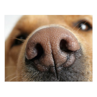Extreem close-up van een hondneus briefkaart